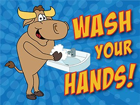 Wash Hands Bull